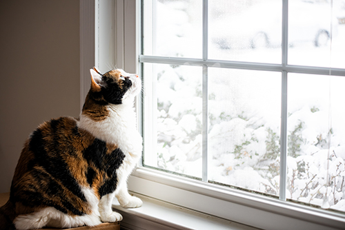 Cat Looking Out of a window in winter
